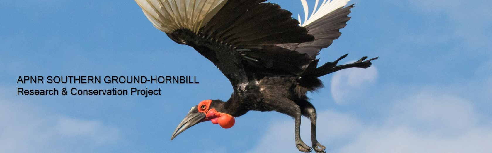 APNR Southern Ground-Hornbill Research & Conservation Project